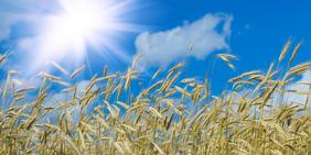 Sonne, Getreidefeld