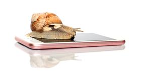 Schnecke auf Smartphone
