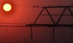 Zwei Tauben auf Hochspannungsleitung vor Sonnenaufgang
